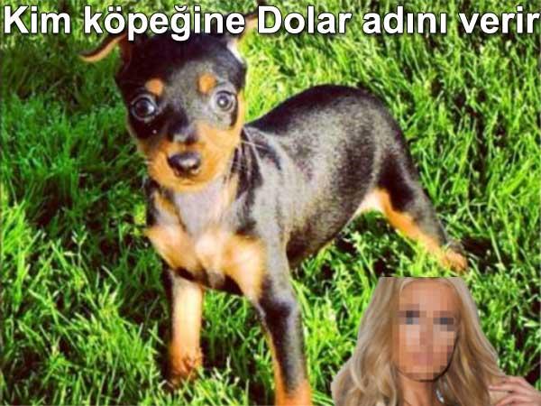 Paris hilton köpeğine dollar adını verdi Kim köpeğine dolar adını verir | Dünyadan Magazin 11-1 Çeviri: Belgin Elçioğlu Belgin Invictus