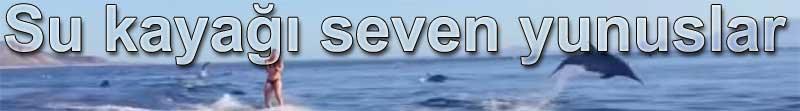 Su kauyağı ve sörf seven yunuslar | Belgin Elçioğlu Belgin Invictus yazdı
